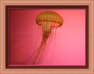 JellyFishFramed